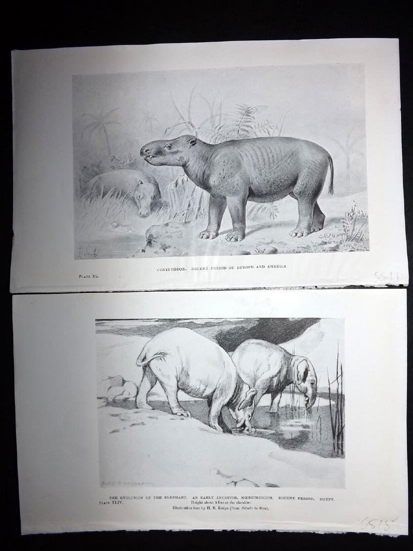Hutchinson, H. N. 1910 Lot 10 Extinct Mammals - 2