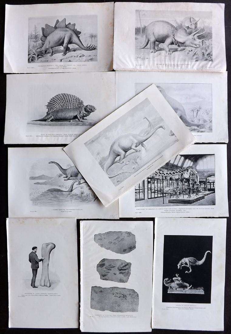 Hutchinson, H. N. 1910 Lot of 10 Dinosaur Prints