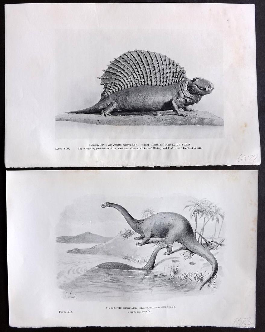 Hutchinson, H. N. 1910 Lot of 10 Dinosaur Prints - 2