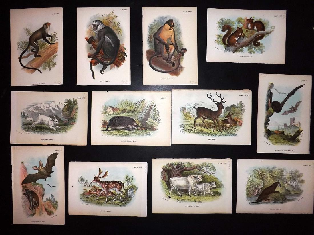 Lloyds's 1897 Lot of 12 Natural History Prints