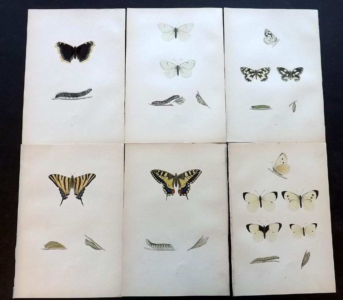 Morris, Francis 1906 Lot of 6 Hand Col Butterfly Prints