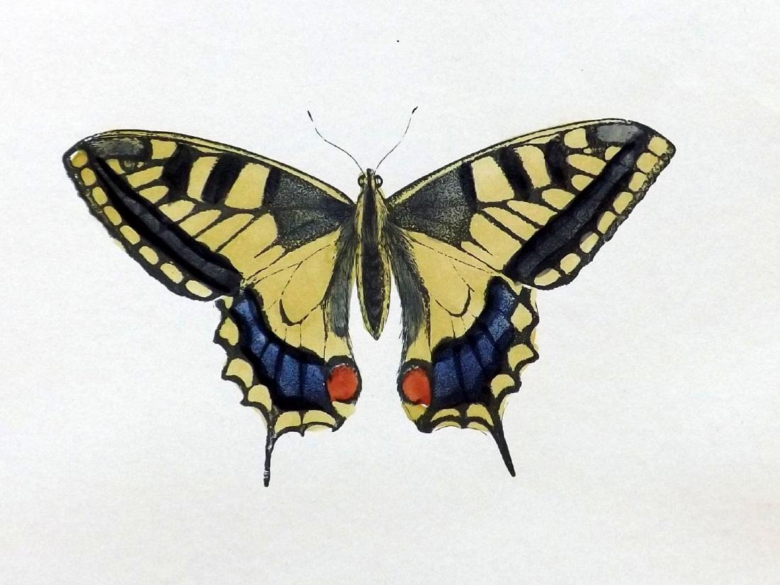 Morris, Francis 1906 Lot of 6 Hand Col Butterfly Prints - 2