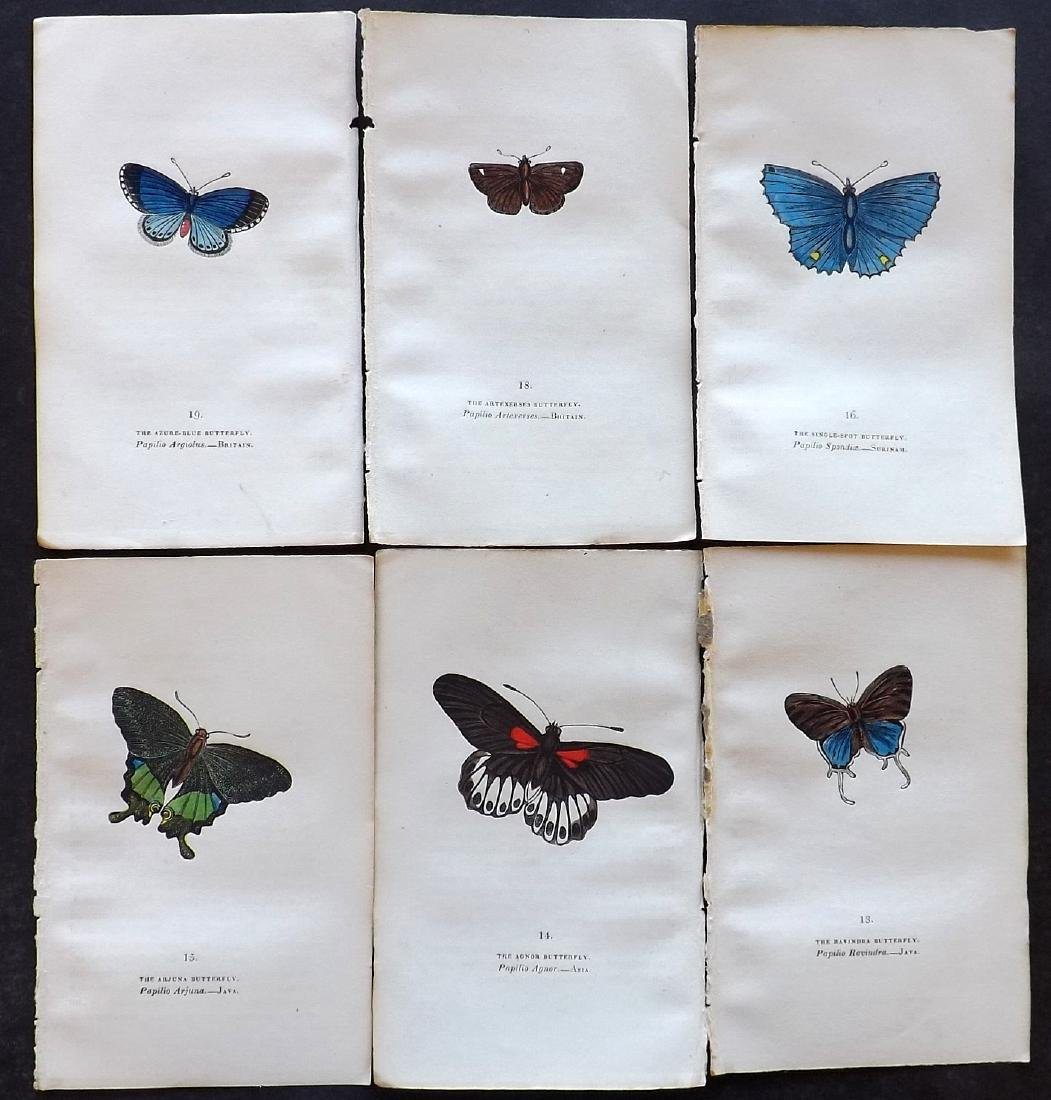 Brown, Captain 1834 Lot of 6 Hand Col Butterfly Prints