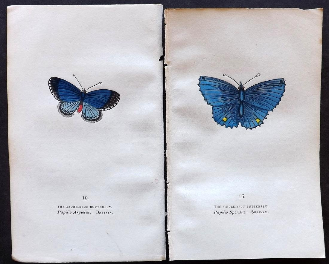 Brown, Captain 1834 Lot of 6 Hand Col Butterfly Prints - 2