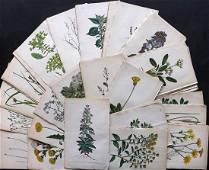 Hogg & Johnson C1870 Lot of 100 HCol Botanical Prints