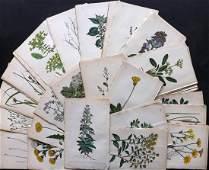 Hogg  Johnson C1870 Lot of 100 HCol Botanical Prints