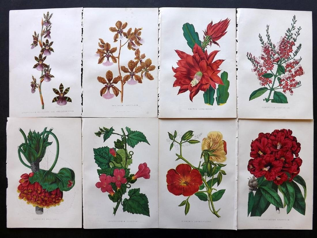 Anderson, James 1871 Lot of 8 Botanical Prints