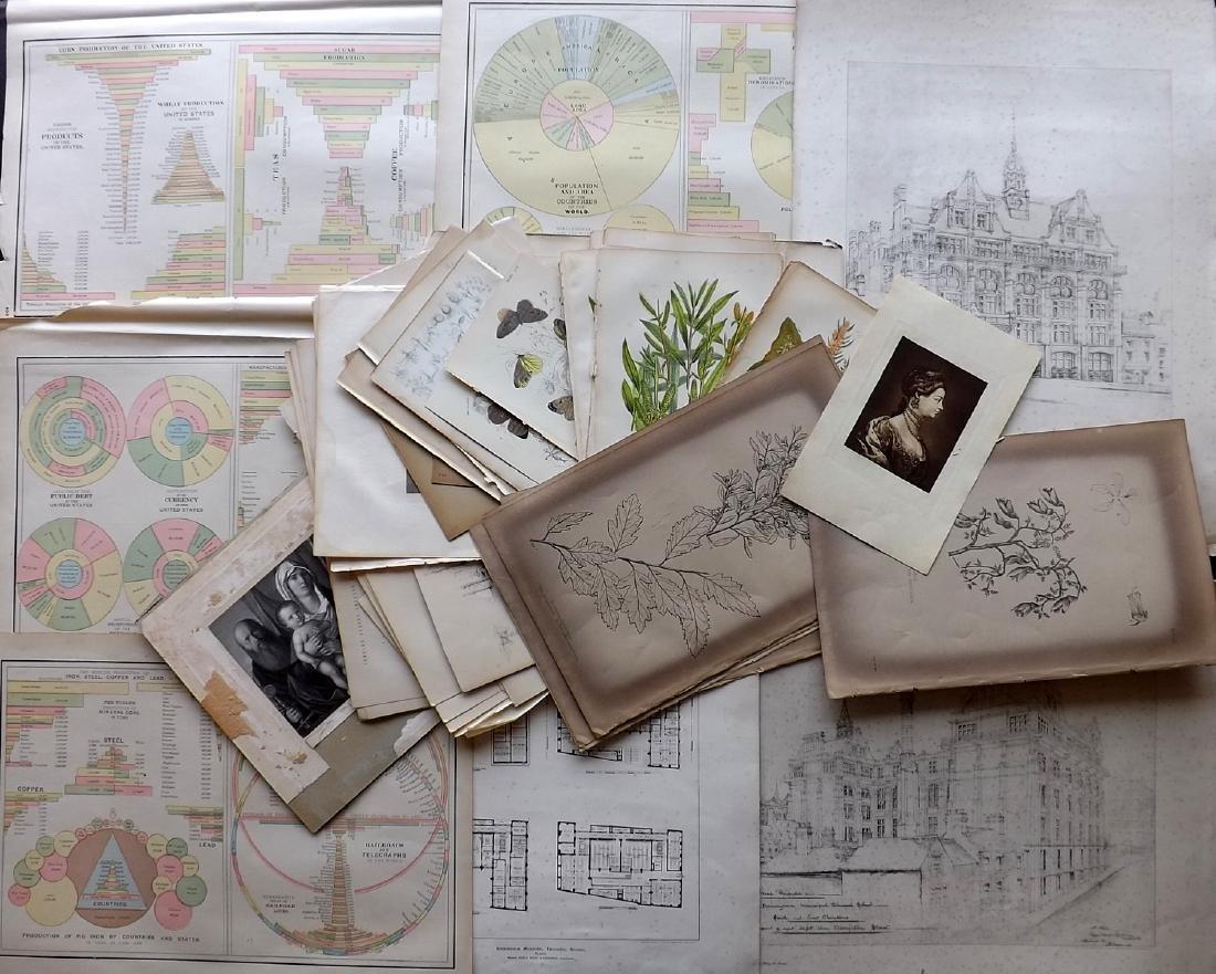 Mixed Prints 19th Century Lot of 50. Botanical etc