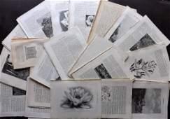 Botanical 1903 Lot of 150 Illustrated Sheets