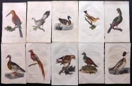 Brightly (Pub) 1815 Lot of 30 Hand Coloured Bird Prints