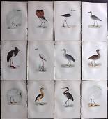 Morris, Francis 1897 Lot of 12 HC Bird Prints. Flamingo