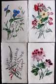 Twamley Louisa 1836 Lot of 4 HCol Botanical Prints