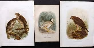 Keulemans John 18851908 Lot of 3 Rare Bird Prints