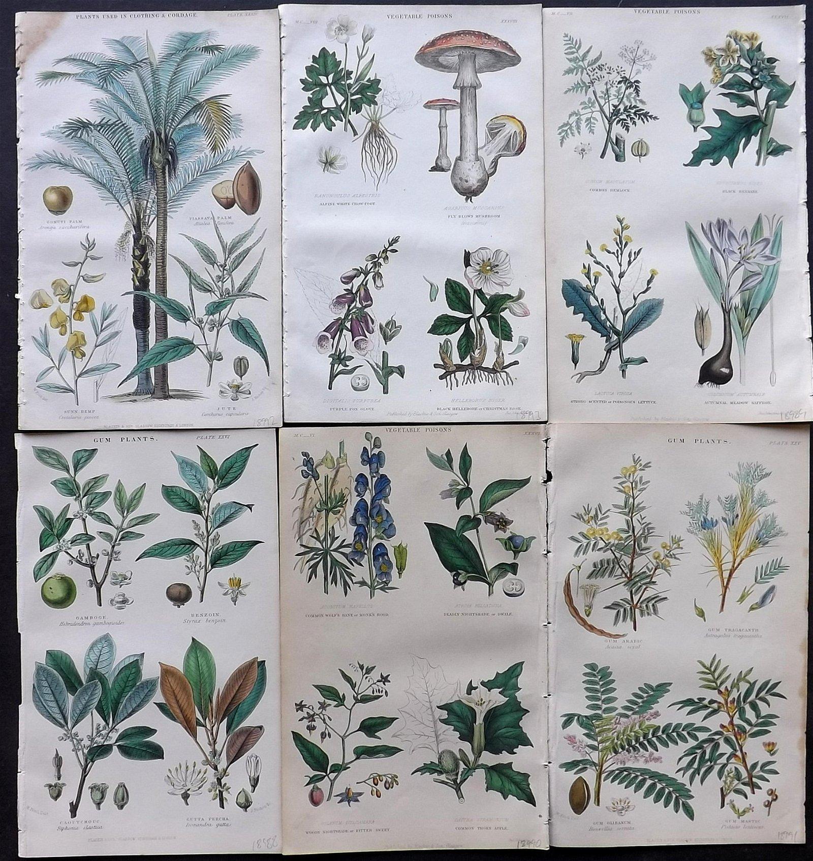 Rhind, William 1866 Lot of 6 Hand Col Botanical Prints