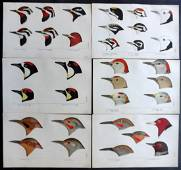 Baird, Spencer 1905 Lot of 6 Rare American Bird Prints