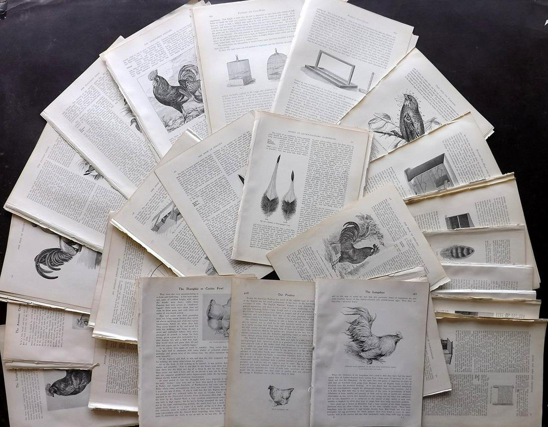 Birds C1880-1910 Lot of 120 Illustrated Sheets, Poultry
