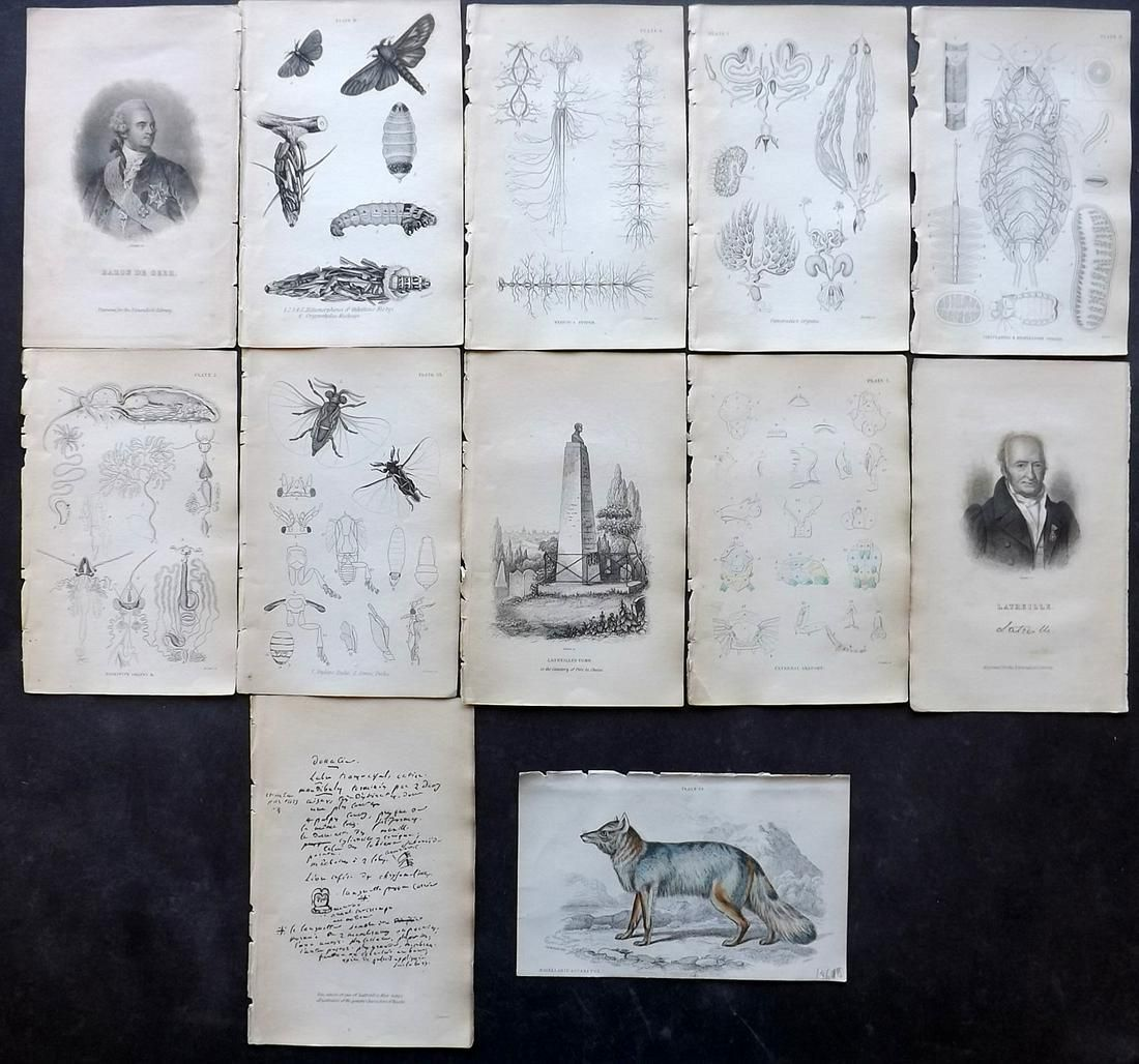 Jardine, William C1840 Lot of Mixed Lot of 12 Prints