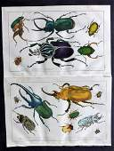 Goldsmith Oliver 1850s Pair of HCol Insects Beetles