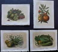 Bicknell W I 1851 Lot of 4 Fruit  Vegetable Prints