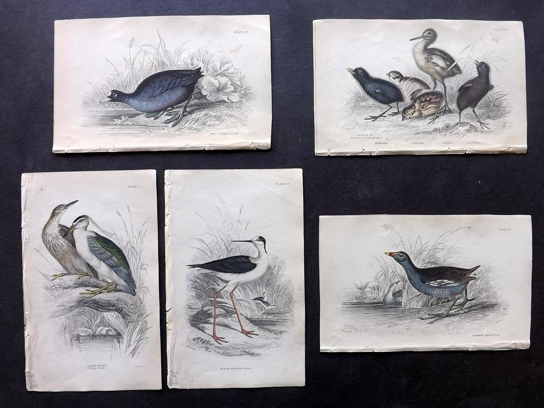 Jardine, William C1840 Lot of 5 Hand Col Bird Prints