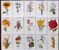 Hulme, Edward C1900 Lot of 15 Botanical Prints
