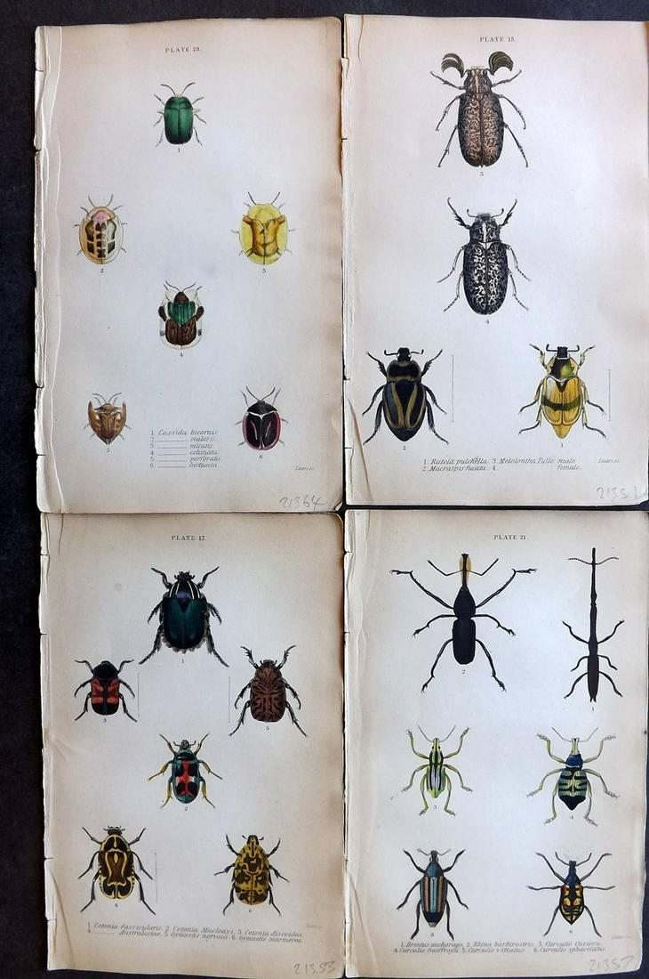 Jardine, William C1840 Lot of 4 Hand Col Beetle Prints