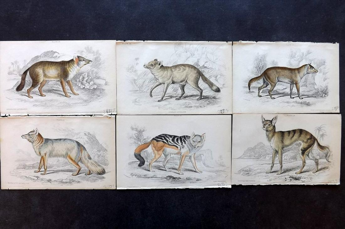 Jardine, William C1840 Lot of 6 HCol Prints. Wild Dogs