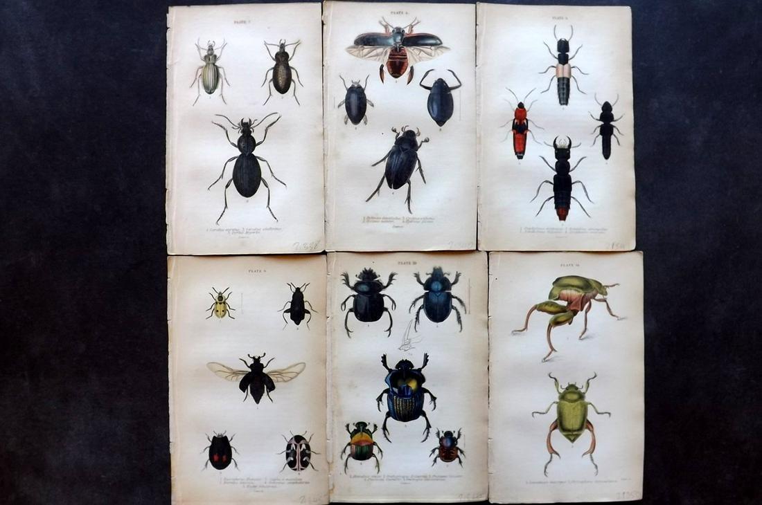 Jardine, William C1840 Lot of 6 Hand Col Beetle Prints