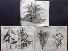 Pluche Noel 1748 Lot of 3 Fruit  Vegetable Prints