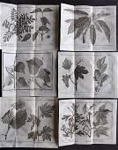 Pluche Noel 1748 Lot of 6 Botanical Prints