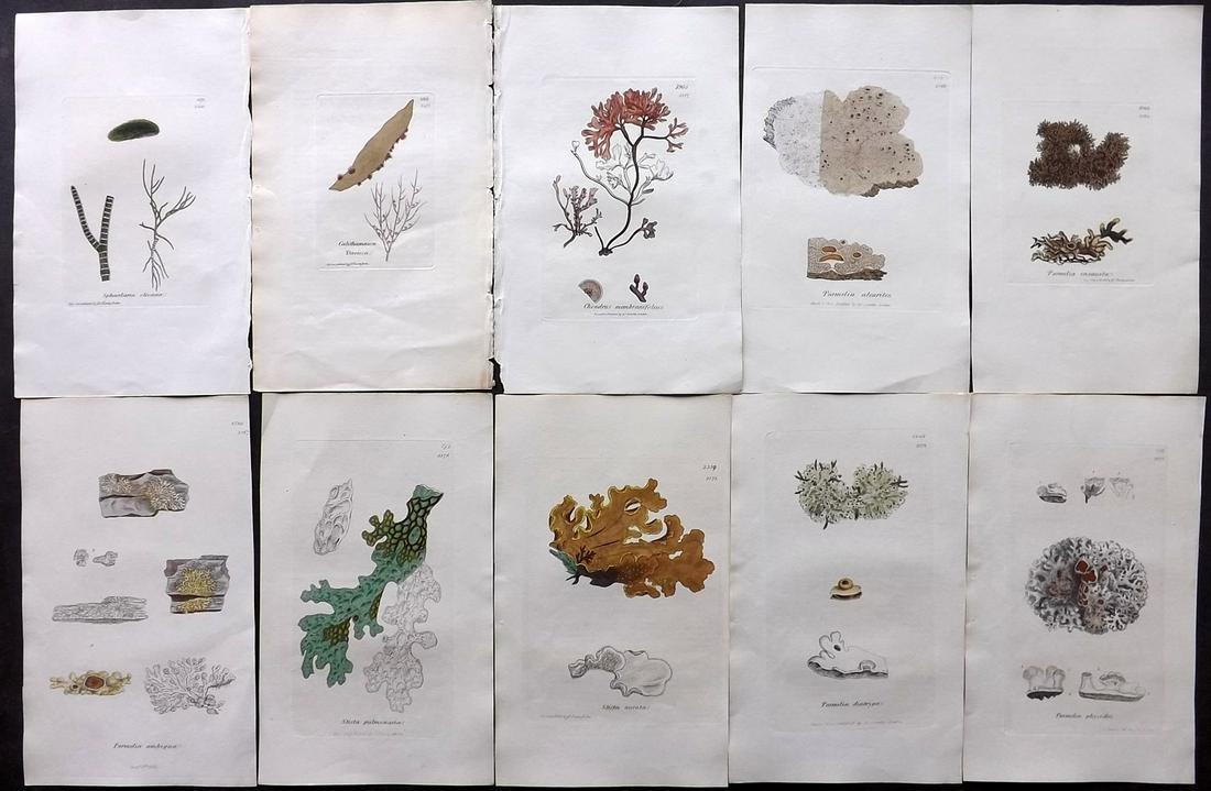 Sowerby, James 1846 Lot 10 HC Aquatic Plants & Lichens