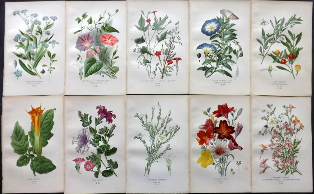 Step, Edward 1897 Lot of 10 Botanical Prints