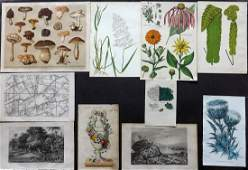 Botanical Prints 19th Cent Mixed Lot of 10