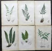 Johnson Charles 1859 Lot of 6 Hand Col Fern Prints