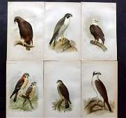 Ridgway, John 1893 Lot of 6 USA Birds of Prey Prints