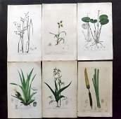 Baxter William C1840 Lot of 6 HCol Botanical Prints