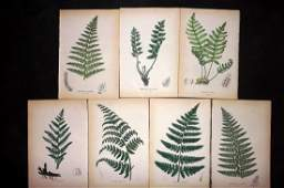 Johnson Charles 1859 Lot of 7 Hand Col Fern Prints