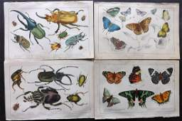Goldsmith Oliver 1851 Prints Butterfly Insects