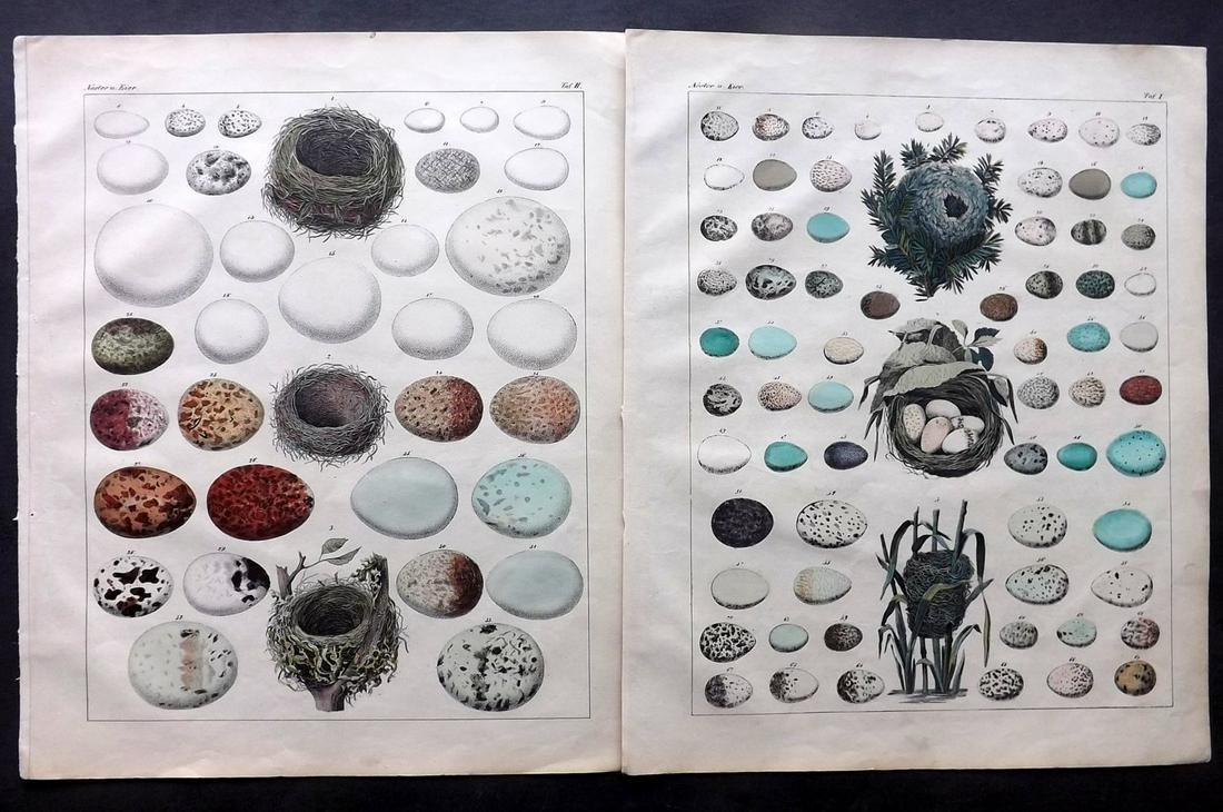 Oken, Lorenz 1843 Pair of HC Prints. Birds Nests & Eggs