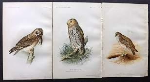 Ridgway, John 1893 Lot of 3 USA Birds Prints. Owls