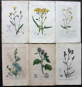 Baxter William C1840 Lot of 6 HCol Botanical Prints