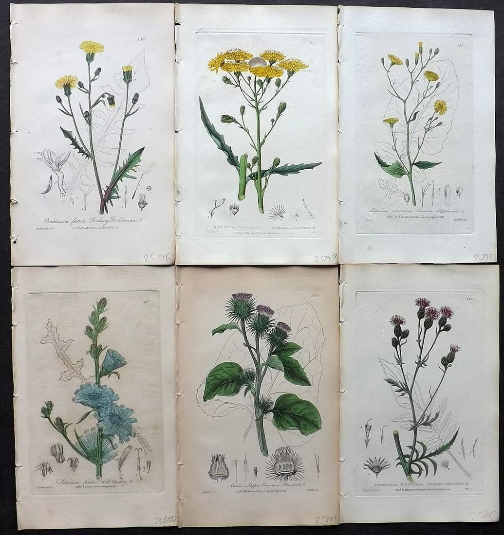 Baxter, William C1840 Lot of 6 HCol Botanical Prints