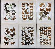 Kappel  Kirby 1895 Lot of 6 Butterfly Prints