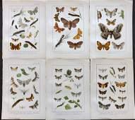 Kappel  Kirby 1895 Lot of 6 Moth Prints