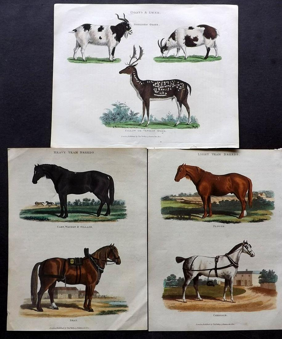 Buffon & Smellie C1821 Lot of 3 HCol Prints. Horses etc