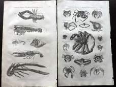 Hall William 1791 Pair of Folio Prints Crabs  Prawns