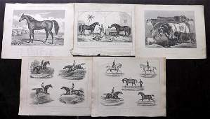 Miles, W. J. C1890 Lot of 10 Prints. Horse Cattle Sheep