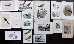 Birds 19th Cent. Mixed of 14 Antique Prints
