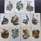 Clark & Amuchastegui 1952 Lot of 11 Bird Prints