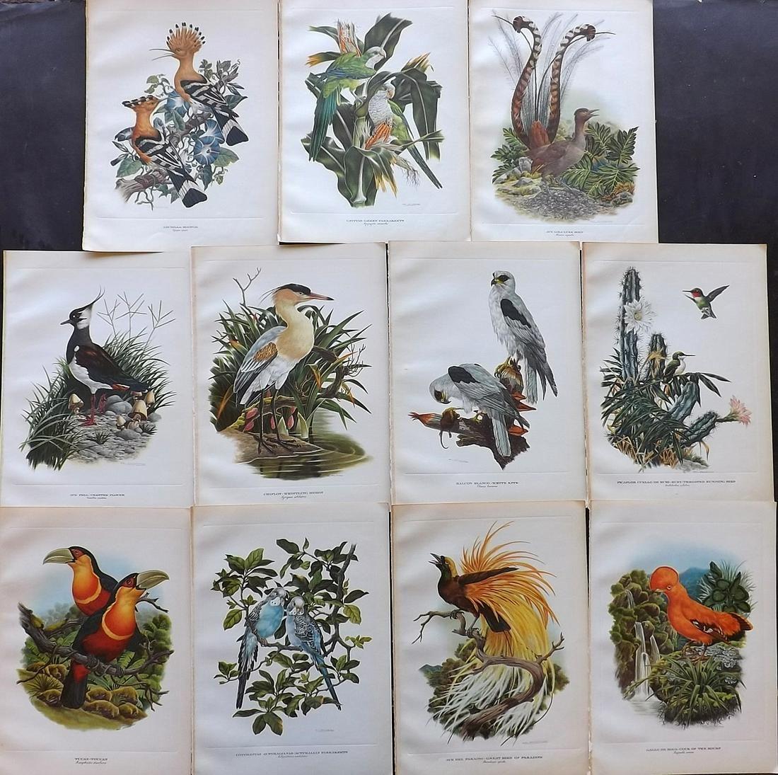Clark & Amuchastegui 1952 Lot of 11 Bird Prints